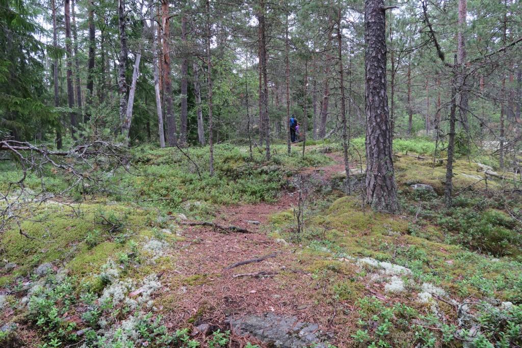 verwunschener Wald auf Pentala